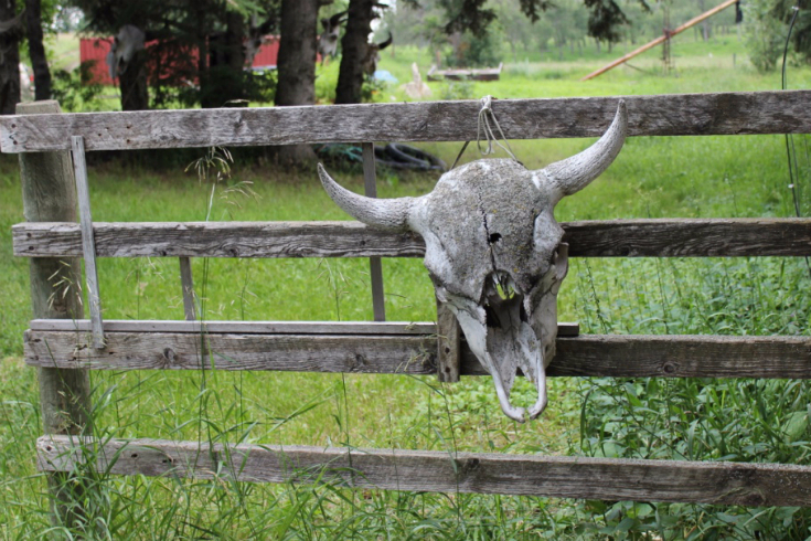 w-02-bohr-hist-3573-entrance-at-anpo-bison-ranch