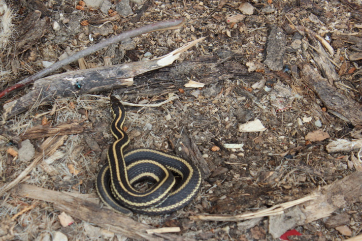 w-57-bohr-hist-3573-gary-the-garter-snake-outside-shop