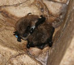 photo: brown bats