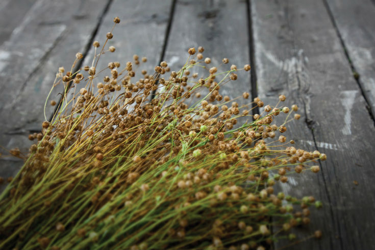 Flax - photo courtesy of Mb Flax Growers Assoc