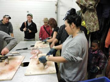 Learning to process fish photo by UWinnipeg