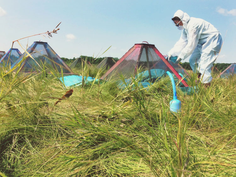 Martine Balcaen uses fluorescent spray on cages to mark mosquitoes in field. Photo provided.