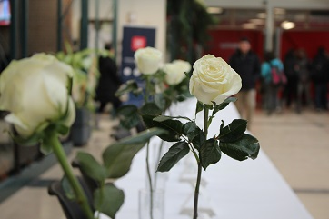 14 roses are on display in Riddell Hall in commemoration of National Day of Remembrance and Action on Violence Against Women.