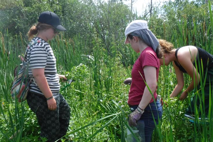 Students in field identifying Plants 735x