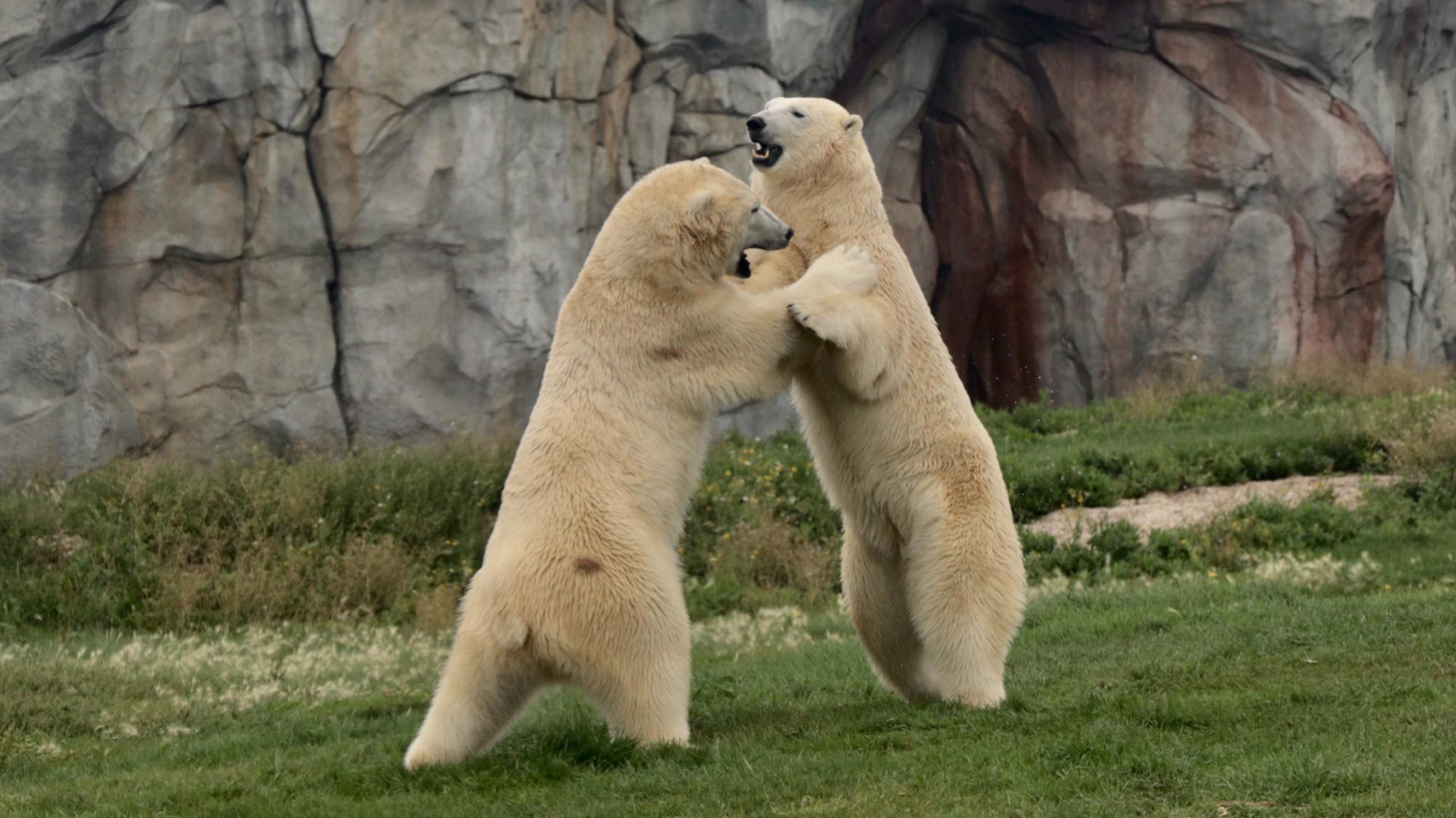 Do polar bears have personalities?